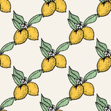 Seamless pattern of lemons. Seamless pattern with lemon on white background,  illustration Royalty Free Stock Photo