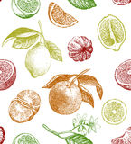 Seamless pattern with lemons, oranges and mandarins. Royalty Free Stock Photos