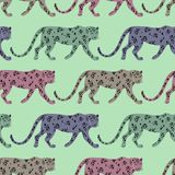 Seamless Pattern With Leopard royalty free stock photography
