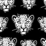 Seamless pattern with leopards Royalty Free Stock Image