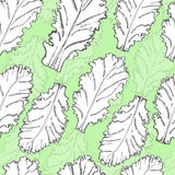 Seamless pattern with lettuce Stock Image