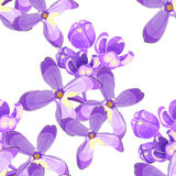 Seamless pattern Lilac branch flowers blooming spring. Vector il Stock Photography