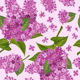 Seamless pattern with lilac vector illustration