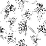 Seamless pattern lilies Stock Images
