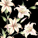 Seamless pattern with lilies. Hand draw watercolor illustration Royalty Free Stock Photos
