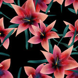 Seamless pattern with lilies texture background. Seamless pattern with lilies texture on black background Stock Images