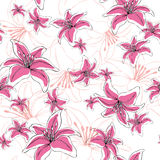 Seamless pattern lily flowers. Seamless pattern  of lily, lilium flowers on white background Royalty Free Stock Images
