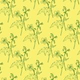 Seamless pattern with line drawing herbs Stock Photo