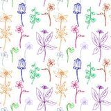 Seamless pattern with line drawing herbs Royalty Free Stock Photo