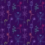 Seamless pattern with line drawing herbs Stock Photography