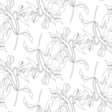 Seamless pattern line flowers alstroemeria. Vector botanical background. Alstromeria. Seamless pattern line flowers alstroemeria. Vector botanical background Stock Images