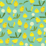 Seamless pattern with little chicks and dandelions Royalty Free Stock Photos
