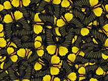 Seamless pattern with lot of different butterflys Stock Photos