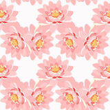 Seamless pattern lotus flower pink close up on a white background Stock Photography