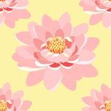Seamless pattern lotus flower pink close up  Royalty Free Stock Image