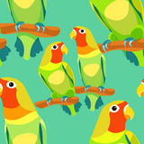 Seamless pattern lovebirds parrot with a red head vector illustr Stock Image