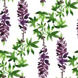 Seamless pattern with lupine drawing by watercolor Stock Images