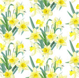 Seamless pattern lush yellow daffodils Royalty Free Stock Photography