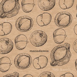 Seamless pattern with macadamia on a vintage background Stock Images