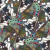 Seamless pattern made from colorful butterfly wing for backgroun Stock Photos
