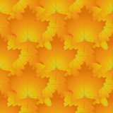Seamless pattern made of red and orange maple leaves, autumn col Stock Photo