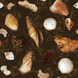 Seamless pattern made shells. Stock Images