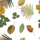 Seamless pattern of color leaves