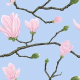 Seamless pattern with magnolia flowers Stock Photography