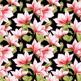 Seamless pattern with magnolia flowers on the black background.   Royalty Free Stock Photography
