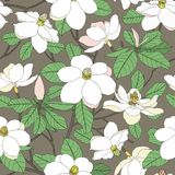 Seamless pattern with magnolia flowers and leaves on background. Stock Photography
