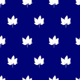 Seamless pattern with maple leaf. Stock Image