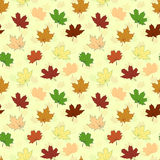 Seamless pattern with maple leaves Royalty Free Stock Photos