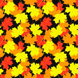 Seamless pattern of maple leaves.  illustration Stock Images