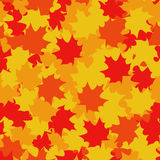 Seamless pattern of  maple leaves Stock Photos