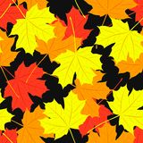 Seamless pattern of maple leaves. Vector Stock Photography