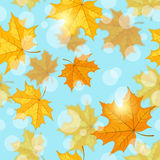 Seamless pattern with maple leaves Royalty Free Stock Images