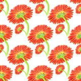 Seamless pattern with marigold flower Royalty Free Stock Photography
