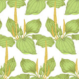 Seamless pattern with medical plants. Stock Images