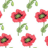 Seamless pattern with medical plants. Royalty Free Stock Photos