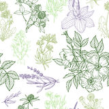 Seamless pattern, medicinal herbs and flowers Stock Photos