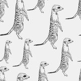 Seamless pattern meerkat stands guard alarm attention black on a Stock Image