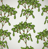 Seamless pattern with mistletoe Stock Photography