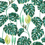 Seamless pattern with monstera leaves. Decorative image of tropical foliage and flower. Background made without clipping. Mask. Easy to use for backdrop Stock Photo