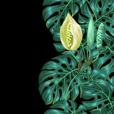 Seamless pattern with monstera leaves. Decorative image of tropical foliage and flower. Background made without clipping Royalty Free Stock Photos