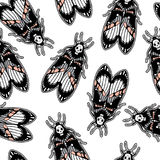Seamless pattern with moth Dead Head, retro style. Royalty Free Stock Photos