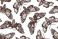 Seamless pattern with moths. Sphingidae. Hand drawn. Vector illustration Royalty Free Stock Image