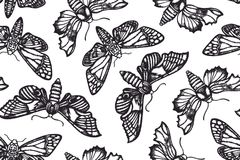 Seamless pattern with moths. Sphingidae. Hand drawn. Vector illustration Royalty Free Stock Photo