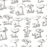 Seamless pattern with mushrooms on a white background Stock Image
