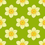 Seamless pattern with narcissus image. Narcissus flower on a green background royalty free illustration