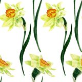 Seamless pattern with narcissus Stock Photo